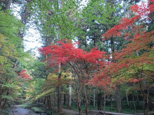 秋ですね、紅葉はもう少し・・・。