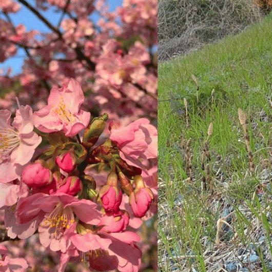 春はもうすぐ・・!?